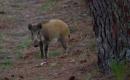 Wildschwein demoliert Glaserei