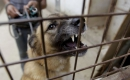 Warum eine Tierhalter-Haftpflicht so wichtig ist