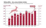 Zahl der Wildunfälle erreicht neue Rekordhöhe