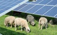 Neuer Nachhaltigkeits-Check für Riester-Fonds