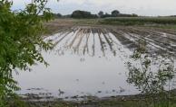 Elementarschadenabsicherung für Landwirte wird wichtiger