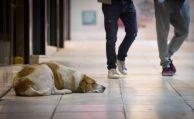 Haften Halter für schlafende Hunde?