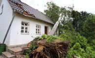 Muss man Bäume auf dem Grundstück regelmäßig prüfen?