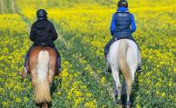 Hundehalterin haftet nicht für scheuende Pferde