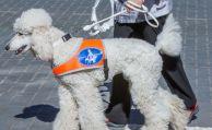 Krankenkasse muss Blindenhund finanzieren