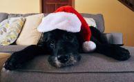 Haustiere als Geschenk – was beim Versicherungsschutz zu beachten ist