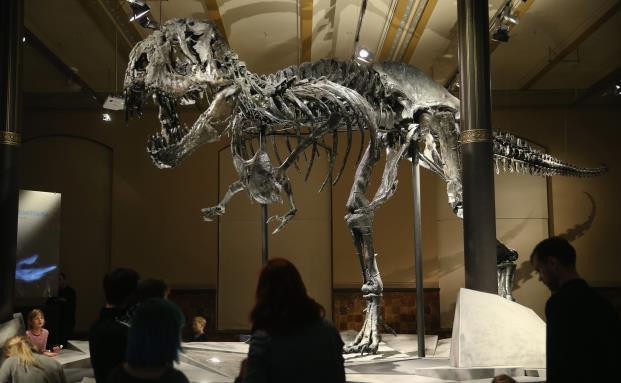 8 Millionen Euro für einen Dino