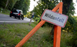 Beamter steht nach Wildunfall ohne Versicherungsschutz da