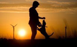 Warum Tierhalterhaftpflichtpolicen vor dem finanziellen Ruin schützen können