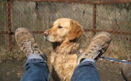Ascore kürt beste Tierhalterhaftpflichtpolicen