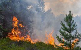 Wer zahlt bei Waldbränden?