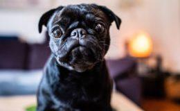 Die besten Hundehalter-Haftplichtversicherungen