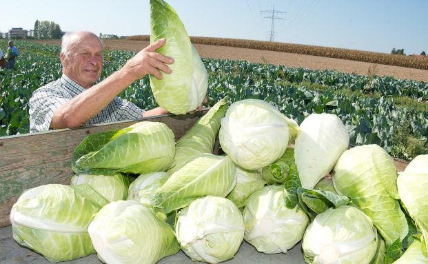 Über gutes und böses Gemüse