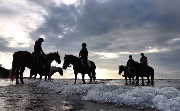 Wie Reiter sich und ihr Pferd absichern sollten