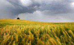 Baden-Württemberg will Policen gegen Wetterextreme bezuschussen