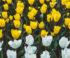 Neue Pflichten zum Thema Nachhaltigkeit – was auf Makler zukommt