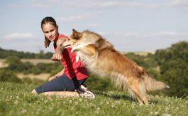 Großteil der Hunde in Deutschland ist nicht versichert