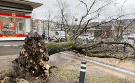 Welche Versicherungen haften für Sturmschäden?