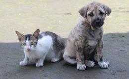 Wuff statt Miau – Hunde beliebter als Katzen