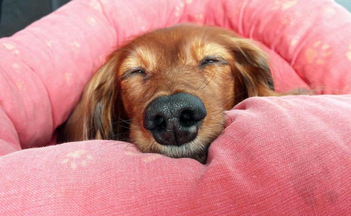 Haustier-Boom dank Corona – diese Versicherungen brauchen Vierbeiner